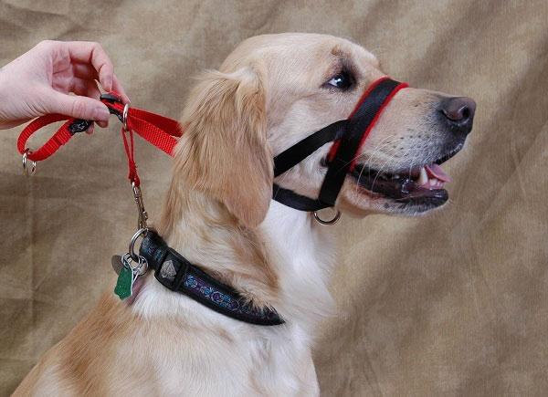 Halter-type Dog Collars