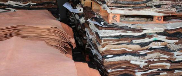 (6/6) A tannery in Italian Conceria Tempesti - Vegetable Tanning
